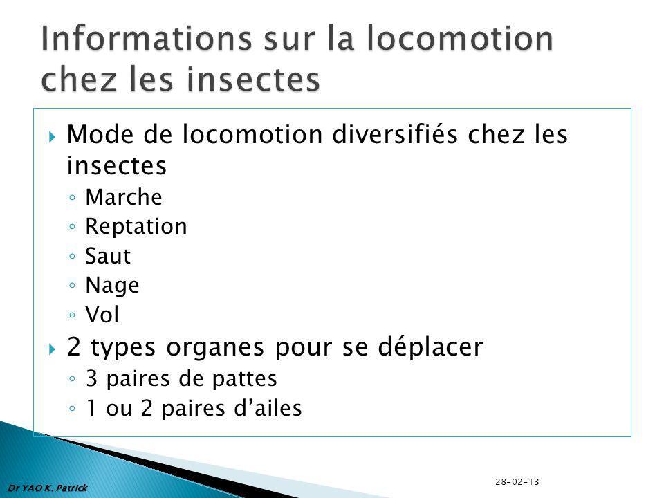 Informations sur la locomotion chez les insectes