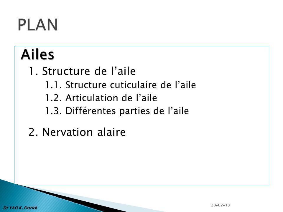 PLAN Ailes 1. Structure de l'aile 2. Nervation alaire