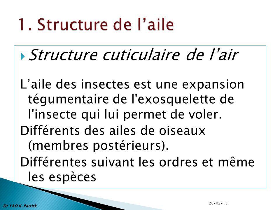 1. Structure de l'aile Structure cuticulaire de l'air