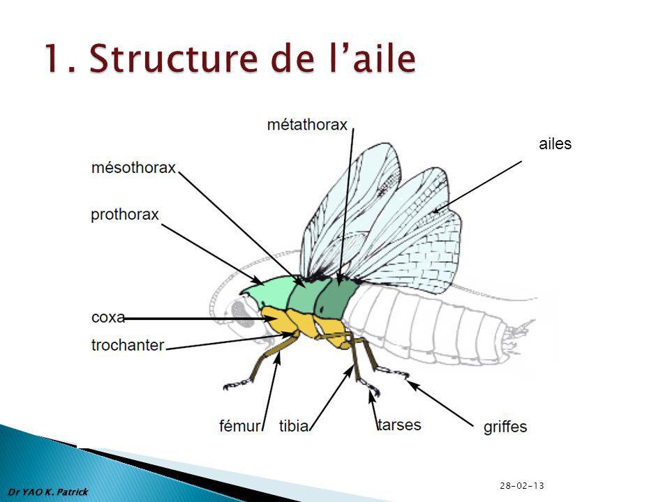 1. Structure de l'aile ailes 28-02-13 Dr YAO K. Patrick