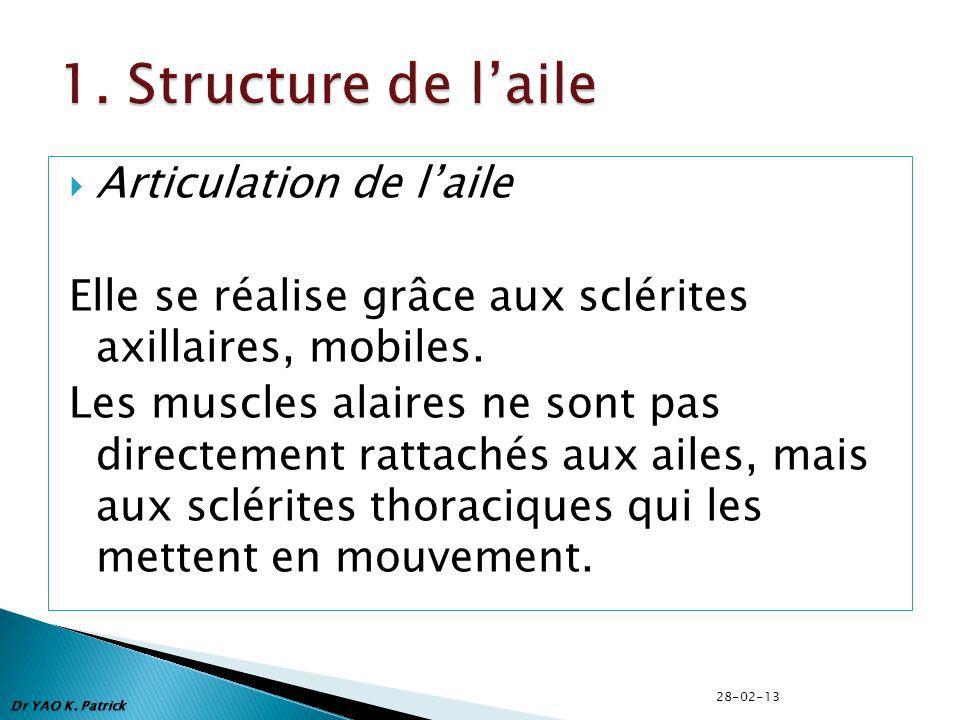 1. Structure de l'aile Articulation de l'aile