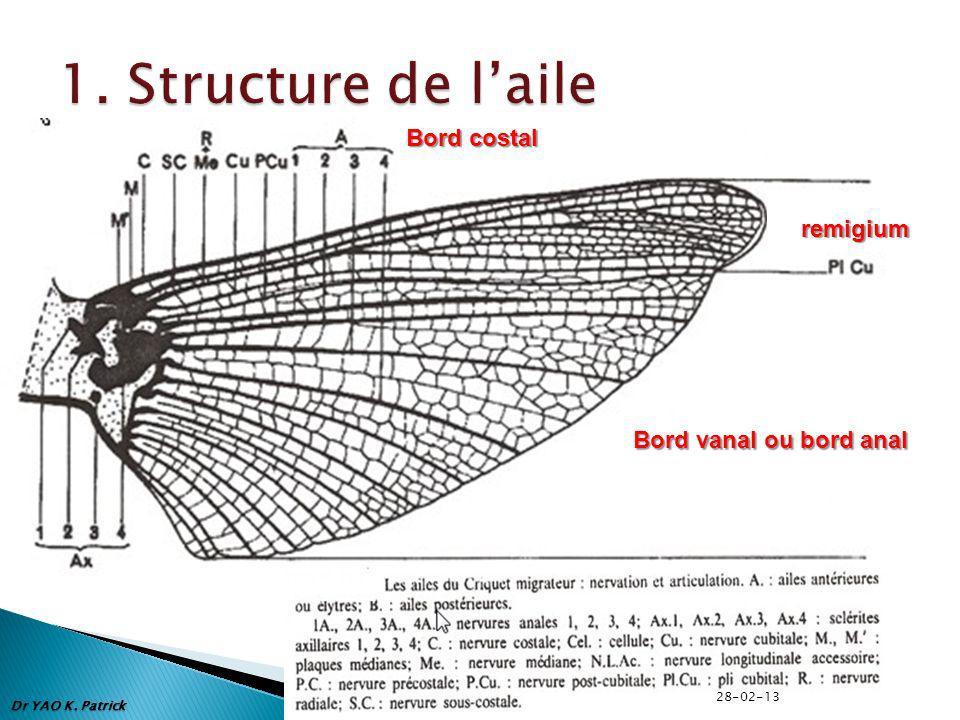 1. Structure de l'aile Bord costal remigium Bord vanal ou bord anal