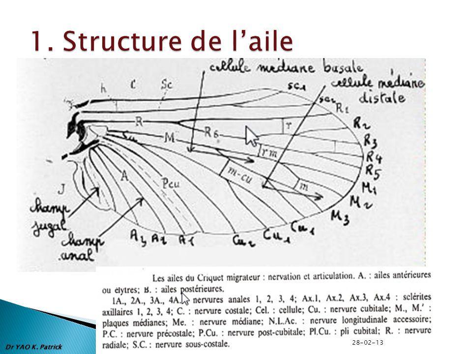 1. Structure de l'aile 28-02-13 Dr YAO K. Patrick