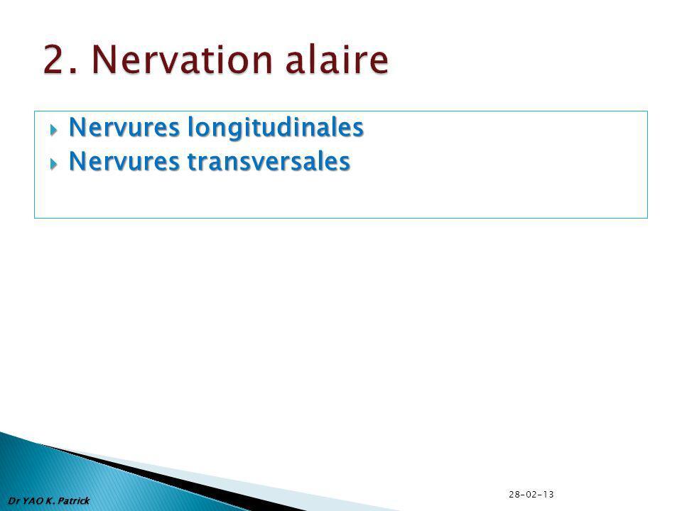 2. Nervation alaire Nervures longitudinales Nervures transversales