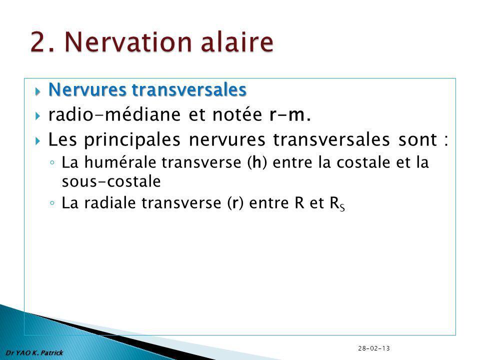 2. Nervation alaire radio-médiane et notée r-m.