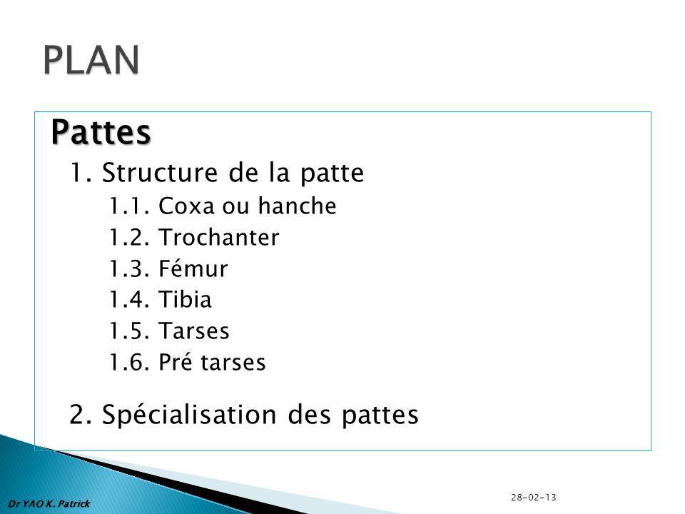 PLAN Pattes 1. Structure de la patte 2. Spécialisation des pattes