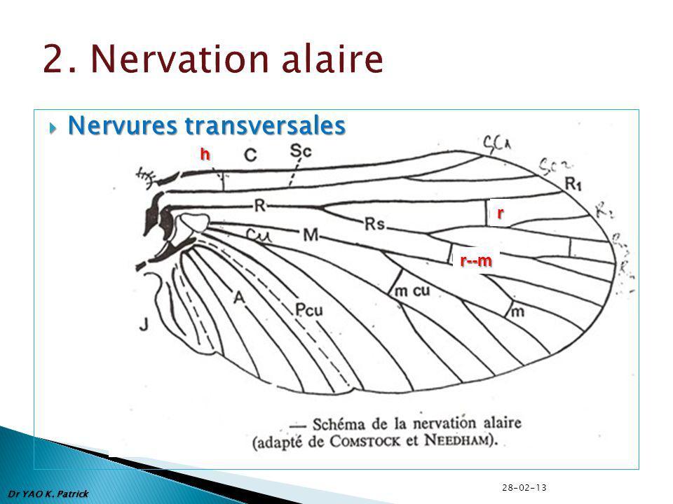 2. Nervation alaire Nervures transversales h r r--m 28-02-13