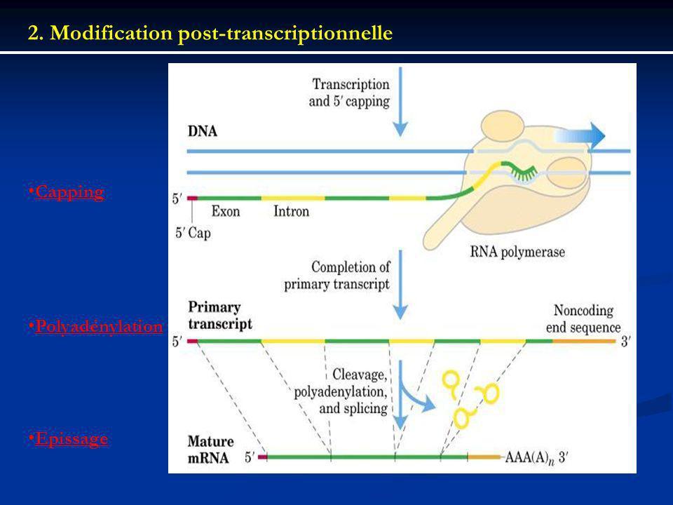 2. Modification post-transcriptionnelle