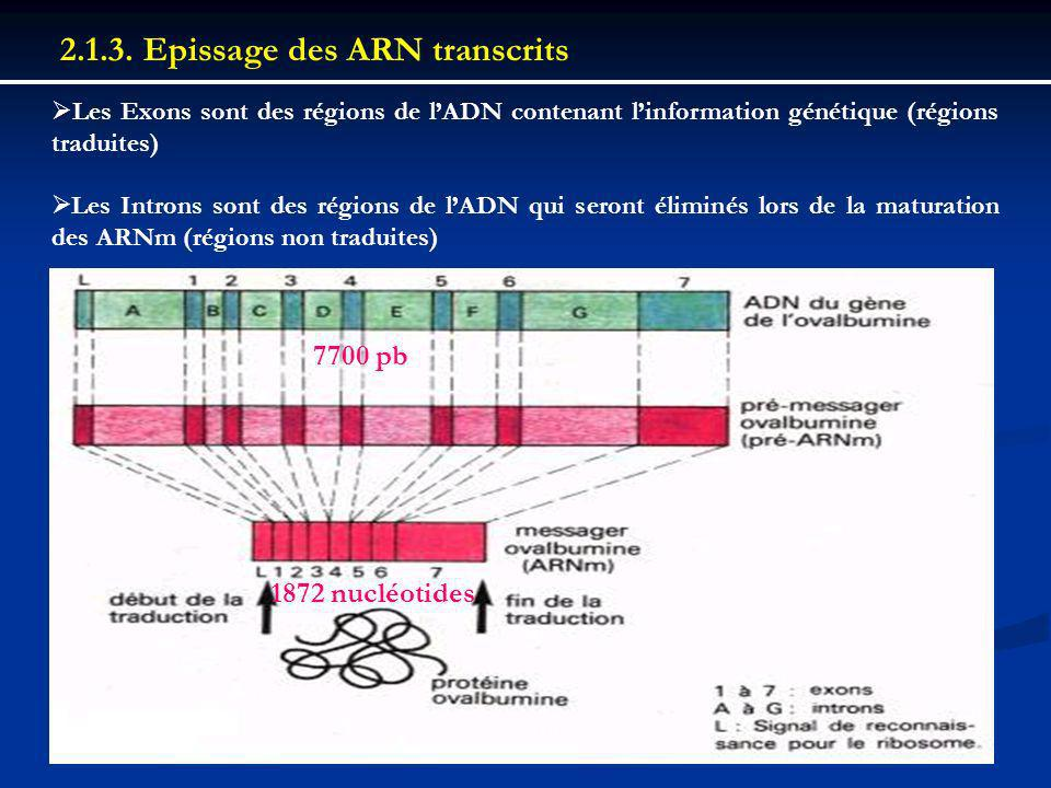 2.1.3. Epissage des ARN transcrits