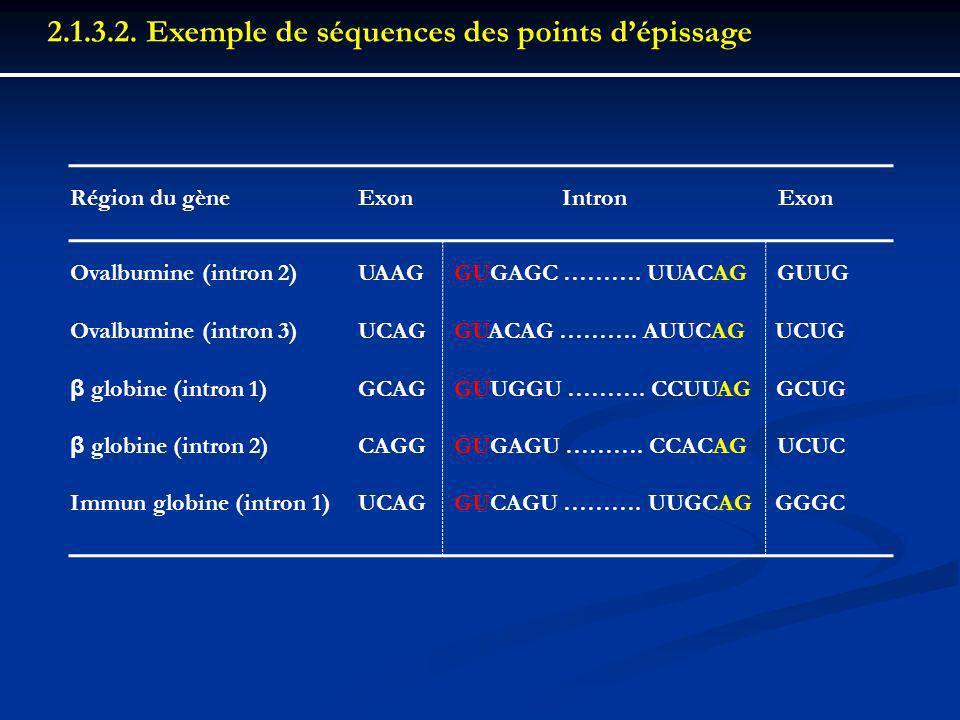 2.1.3.2. Exemple de séquences des points d'épissage