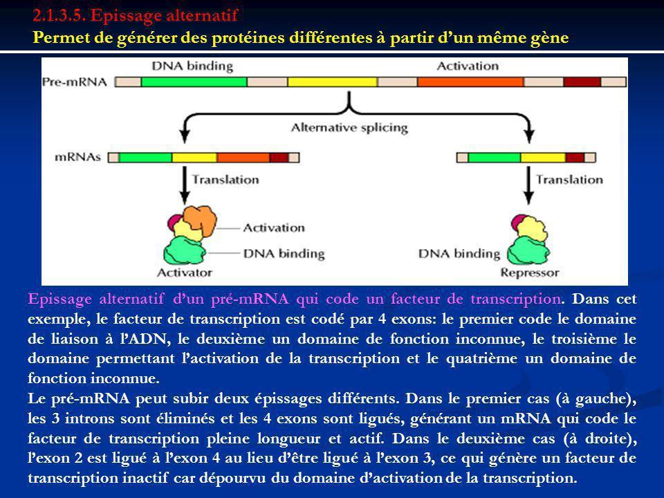 Permet de générer des protéines différentes à partir d'un même gène