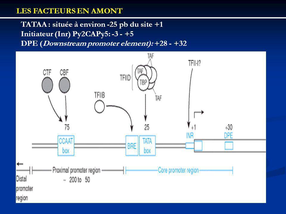 LES FACTEURS EN AMONT TATAA : située à environ -25 pb du site +1. Initiateur (Inr) Py2CAPy5: -3 - +5.