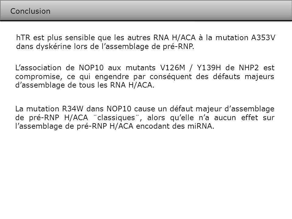 Conclusion hTR est plus sensible que les autres RNA H/ACA à la mutation A353V dans dyskérine lors de l'assemblage de pré-RNP.