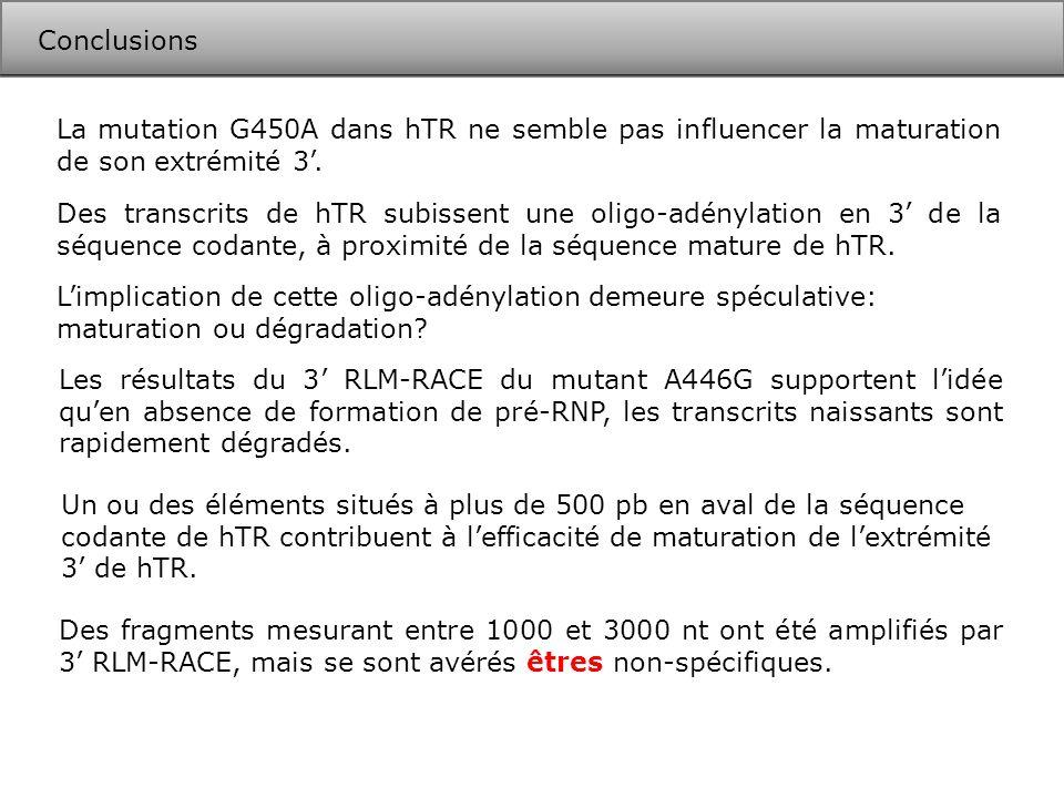 ConclusionsLa mutation G450A dans hTR ne semble pas influencer la maturation de son extrémité 3'.