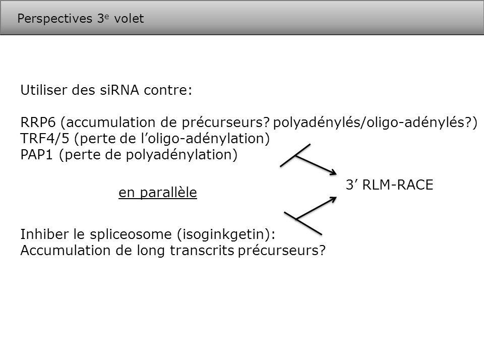 Utiliser des siRNA contre: