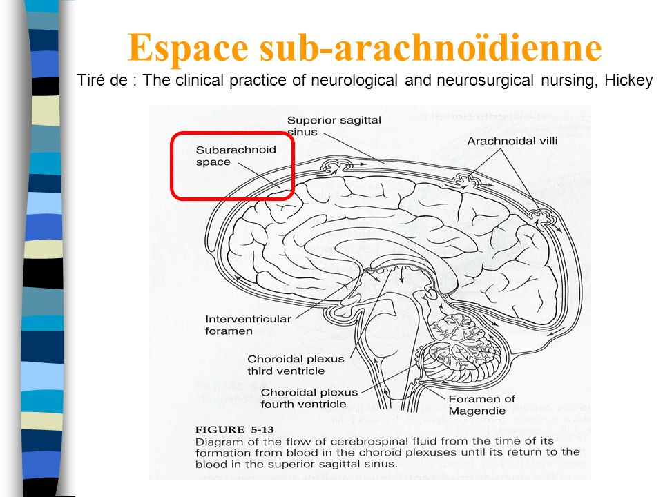 Espace sub-arachnoïdienne Tiré de : The clinical practice of neurological and neurosurgical nursing, Hickey