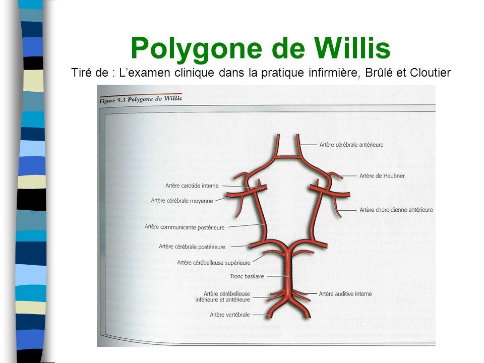 Polygone de Willis Tiré de : L'examen clinique dans la pratique infirmière, Brûlé et Cloutier