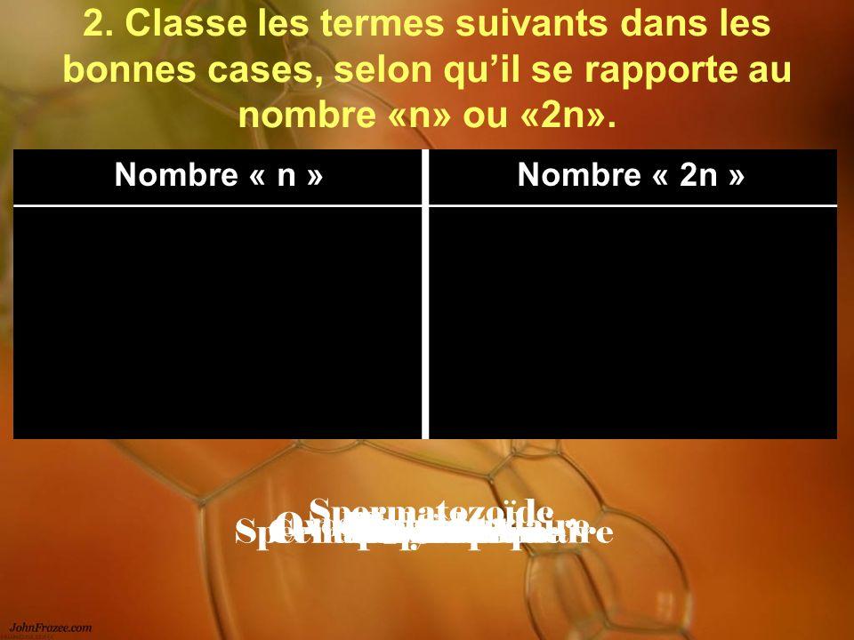 2. Classe les termes suivants dans les bonnes cases, selon qu'il se rapporte au nombre «n» ou «2n».