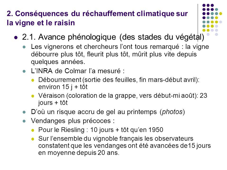 2. Conséquences du réchauffement climatique sur la vigne et le raisin