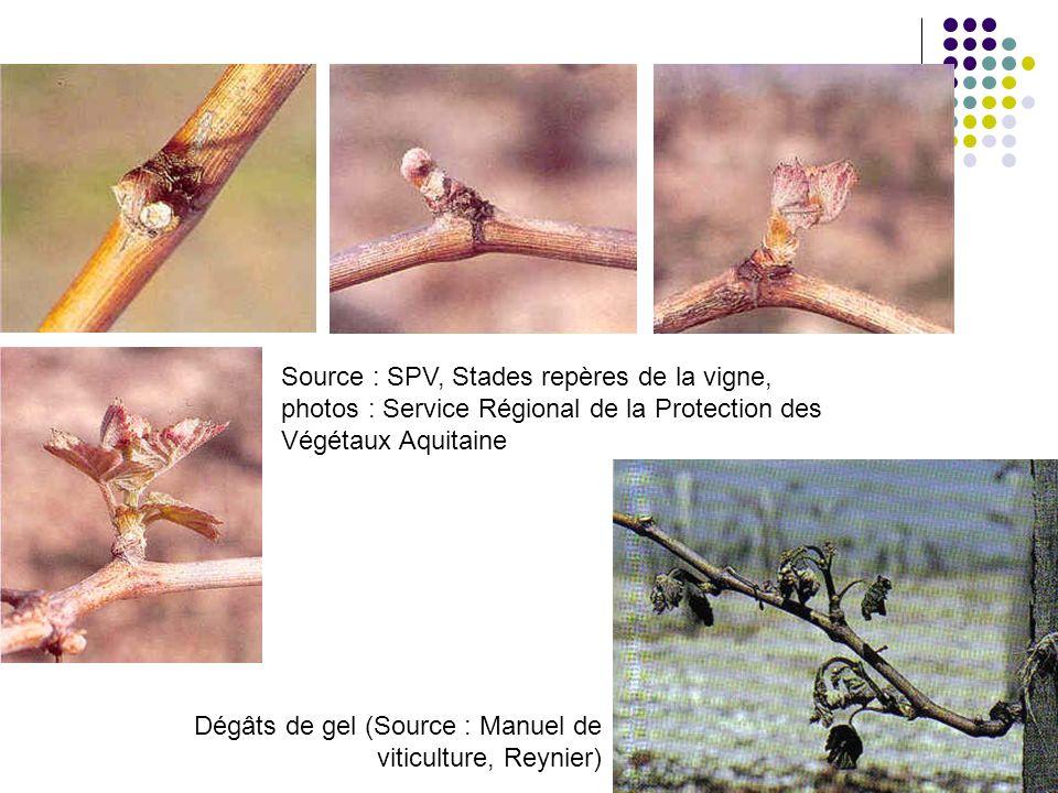 Source : SPV, Stades repères de la vigne, photos : Service Régional de la Protection des Végétaux Aquitaine