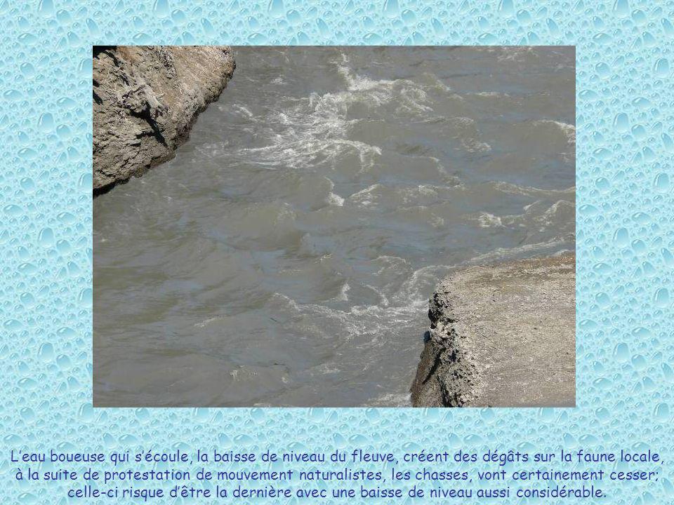 L'eau boueuse qui s'écoule, la baisse de niveau du fleuve, créent des dégâts sur la faune locale, à la suite de protestation de mouvement naturalistes, les chasses, vont certainement cesser; celle-ci risque d'être la dernière avec une baisse de niveau aussi considérable.