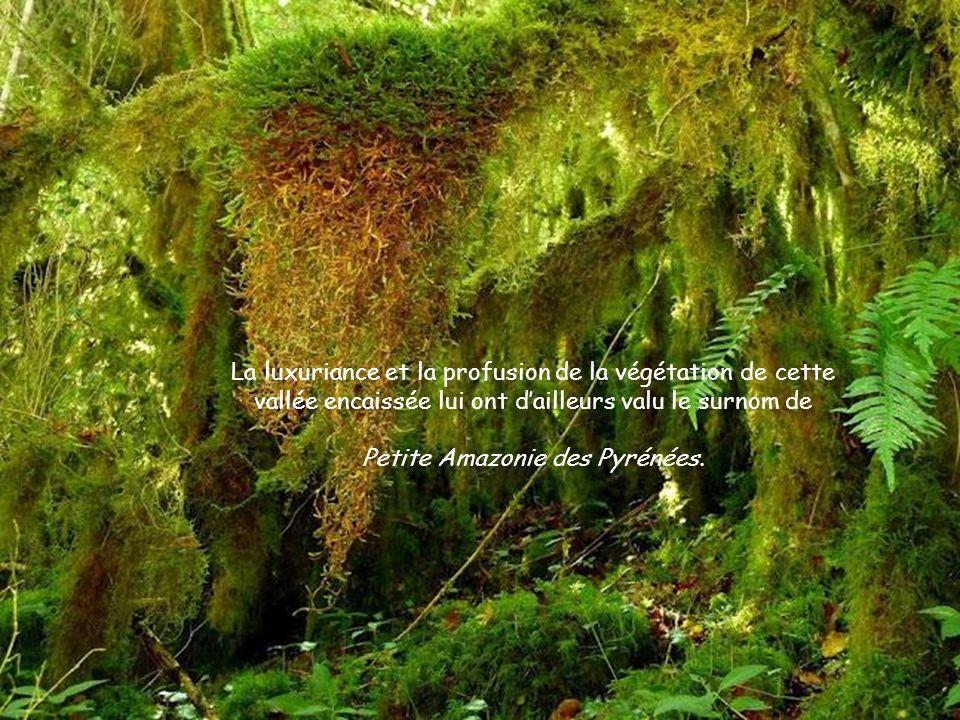 Petite Amazonie des Pyrénées.