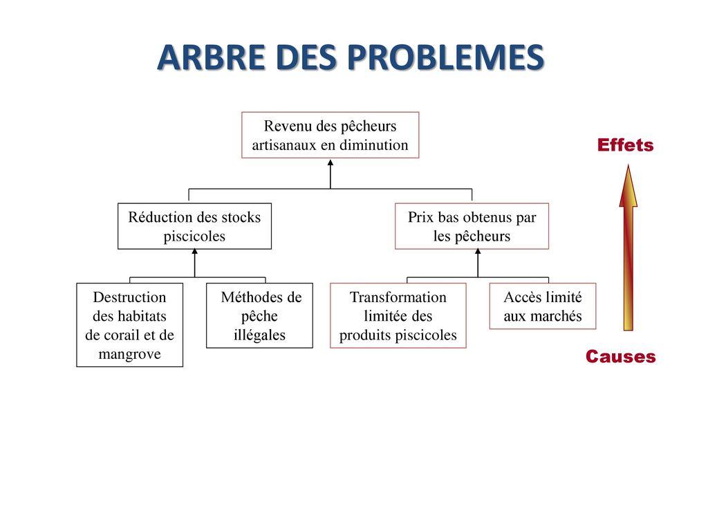 Gestion du cycle de projet nouakchott 24 27 novembre ppt t l charger - Arbre trentenaire en limite de propriete ...