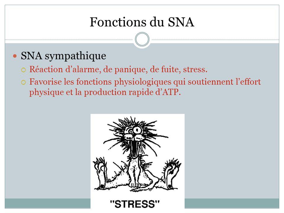 Fonctions du SNA SNA sympathique