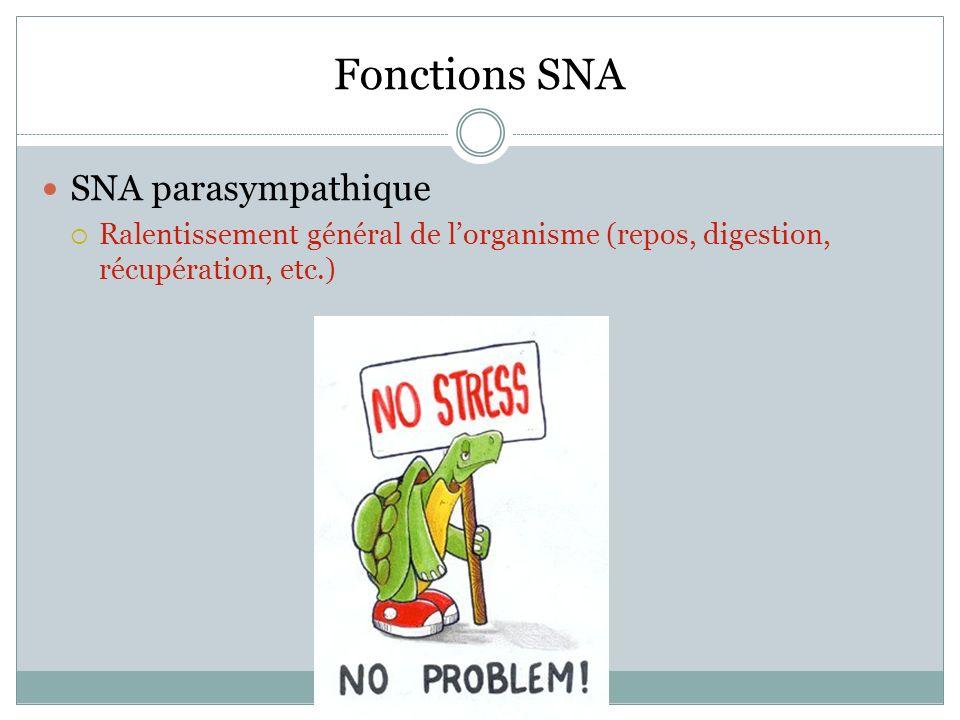 Fonctions SNA SNA parasympathique