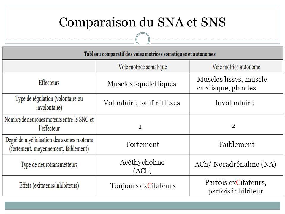Comparaison du SNA et SNS