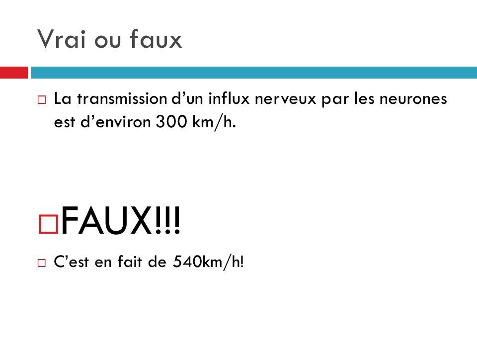 Vrai ou faux La transmission d'un influx nerveux par les neurones est d'environ 300 km/h. FAUX!!!