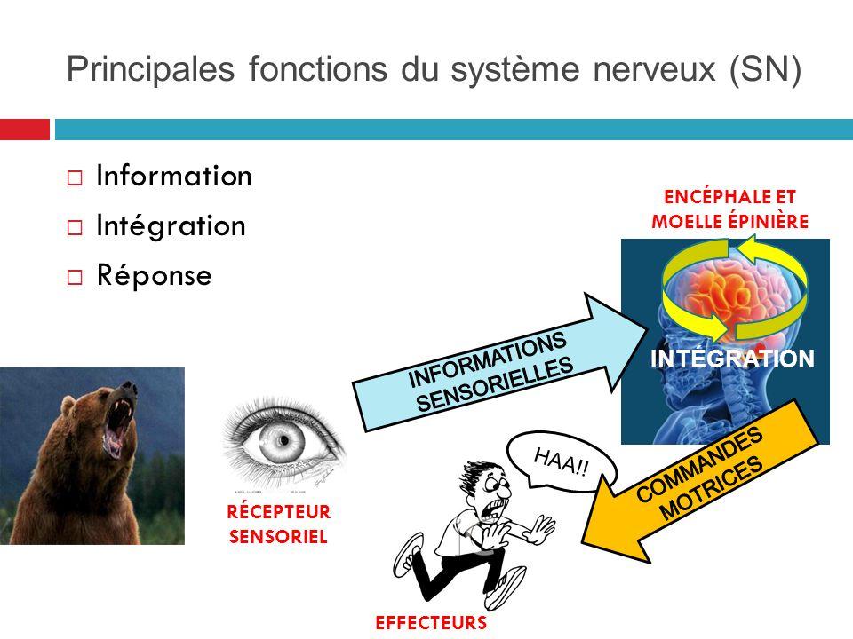 Principales fonctions du système nerveux (SN)