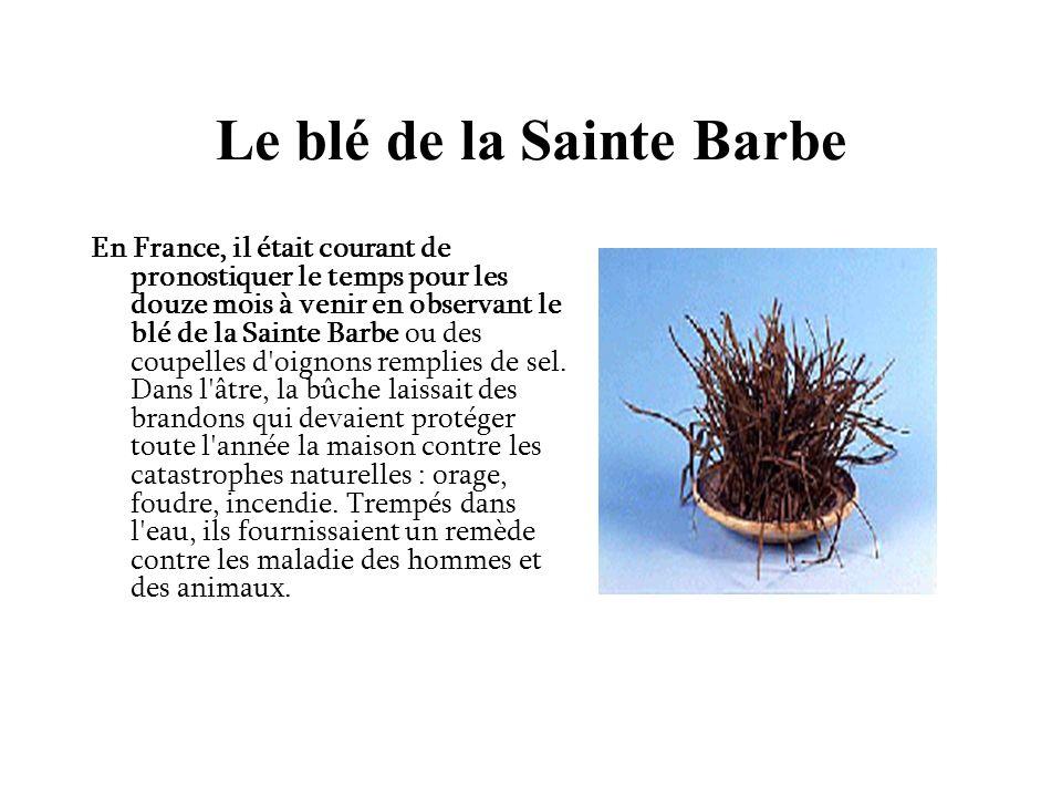 Le blé de la Sainte Barbe