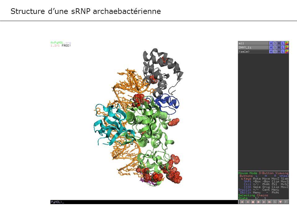 Structure d'une sRNP archaebactérienne
