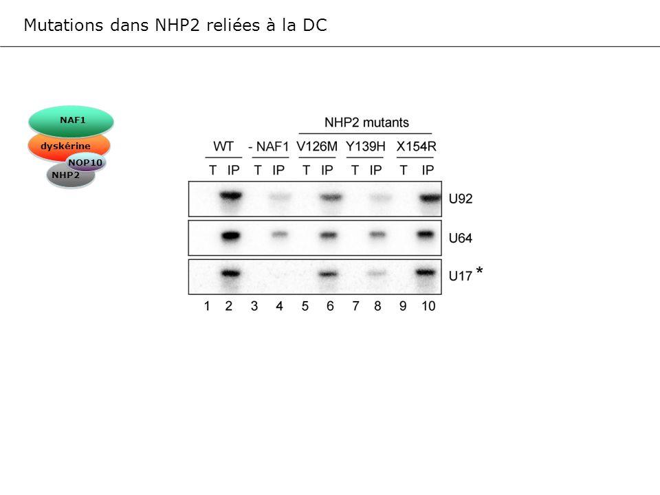 Mutations dans NHP2 reliées à la DC