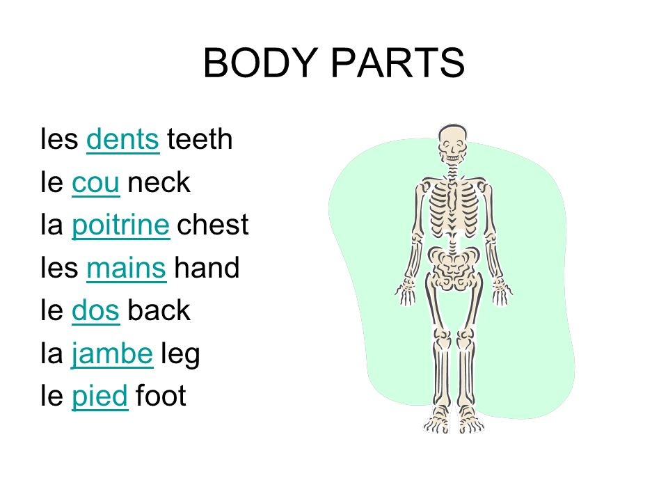 BODY PARTS les dents teeth le cou neck la poitrine chest