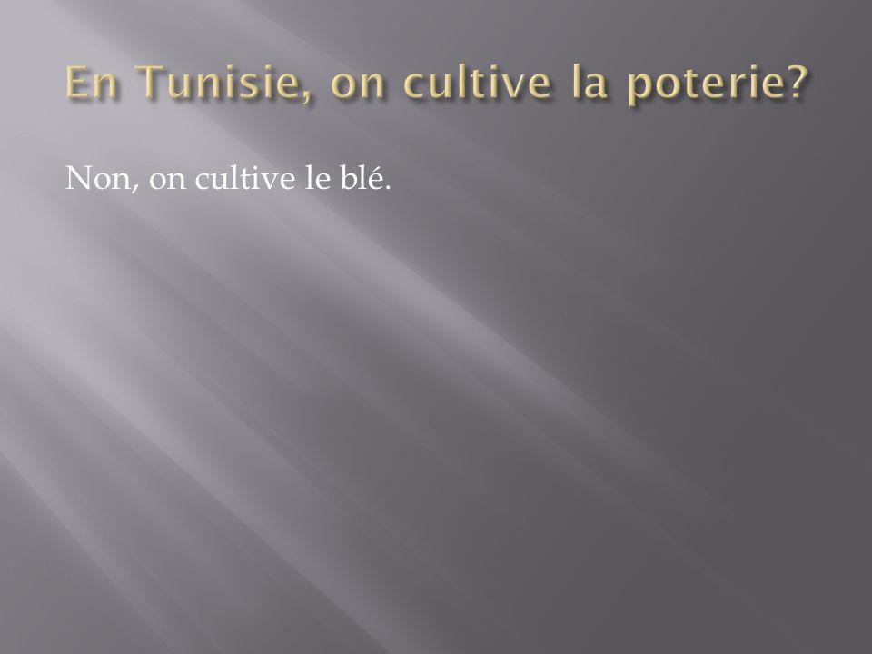 En Tunisie, on cultive la poterie