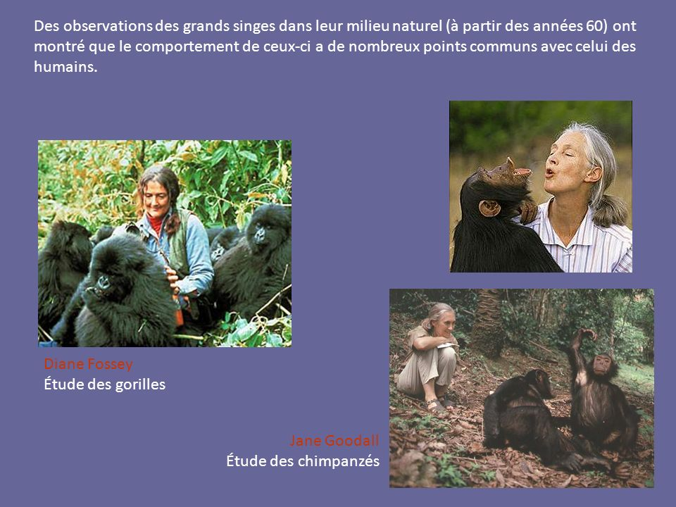 Diane Fossey Étude des gorilles