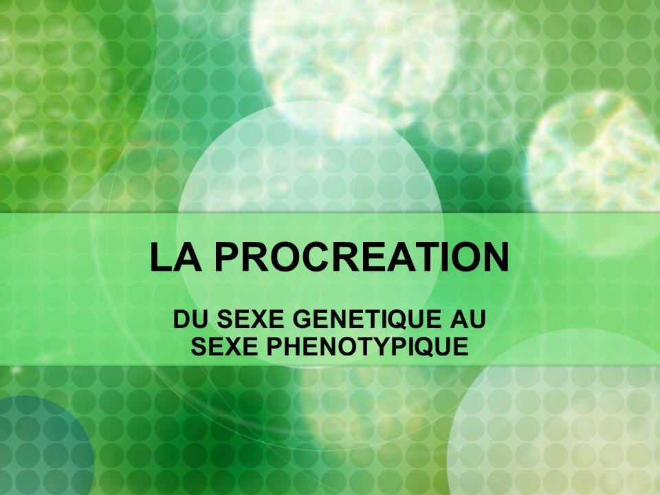 DU SEXE GENETIQUE AU SEXE PHENOTYPIQUE