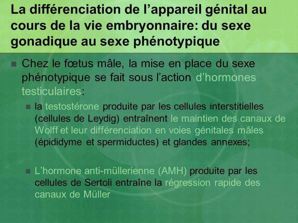 La différenciation de l'appareil génital au cours de la vie embryonnaire: du sexe gonadique au sexe phénotypique