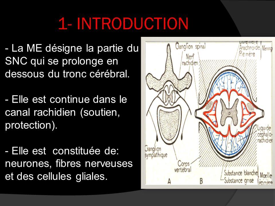 1- INTRODUCTION - La ME désigne la partie du SNC qui se prolonge en dessous du tronc cérébral.