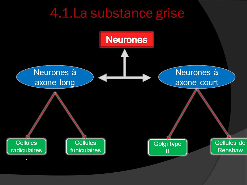 4.1.La substance grise Neurones Neurones à axone long