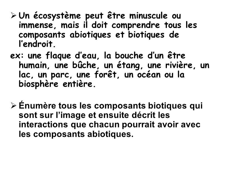 Un écosystème peut être minuscule ou immense, mais il doit comprendre tous les composants abiotiques et biotiques de l'endroit.