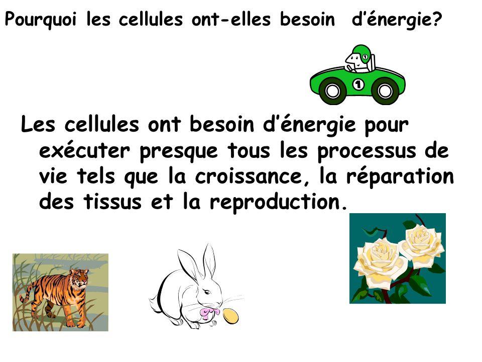 Pourquoi les cellules ont-elles besoin d'énergie