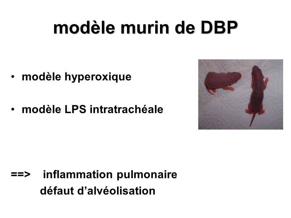 modèle murin de DBP modèle hyperoxique modèle LPS intratrachéale