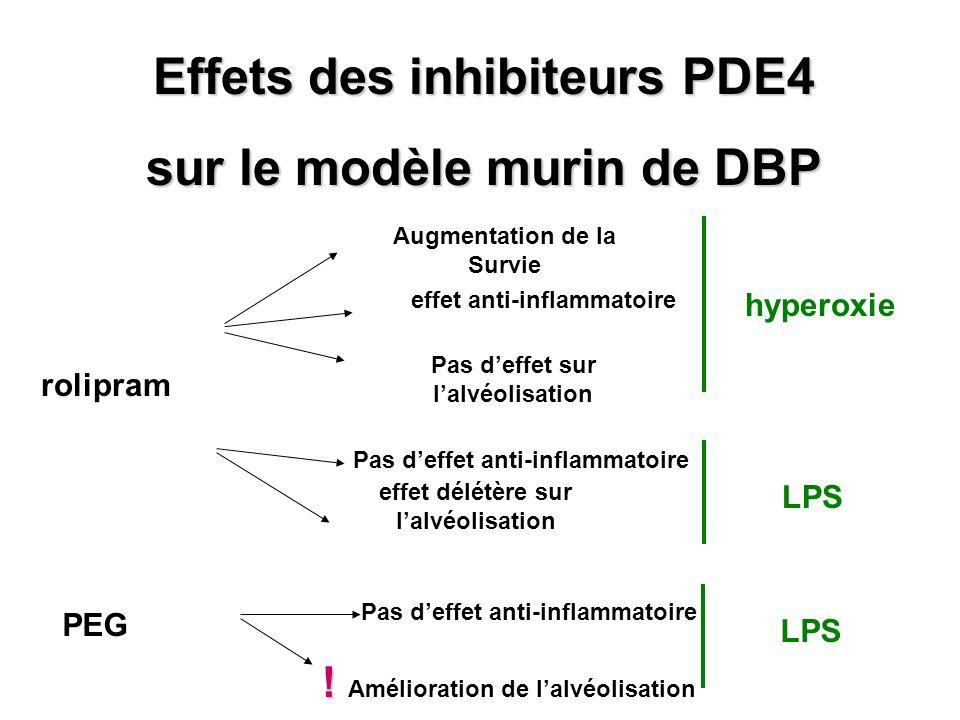 Effets des inhibiteurs PDE4 sur le modèle murin de DBP