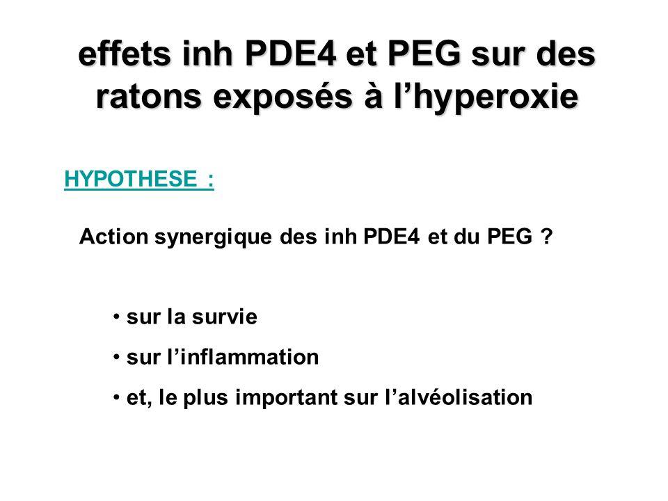 effets inh PDE4 et PEG sur des ratons exposés à l'hyperoxie