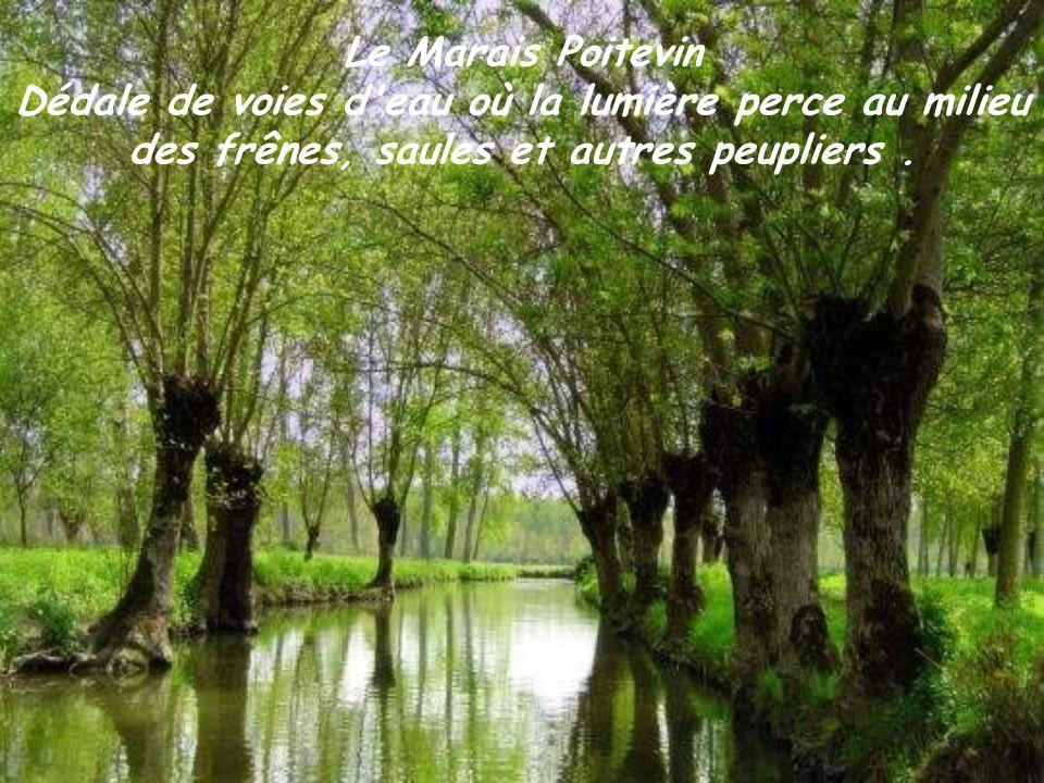 Le Marais Poitevin Dédale de voies d eau où la lumière perce au milieu des frênes, saules et autres peupliers .