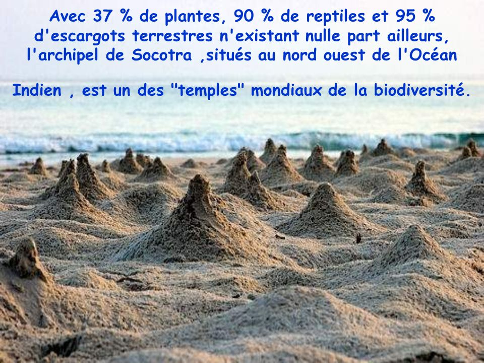 Avec 37 % de plantes, 90 % de reptiles et 95 % d escargots terrestres n existant nulle part ailleurs, l archipel de Socotra ,situés au nord ouest de l Océan Indien , est un des temples mondiaux de la biodiversité.