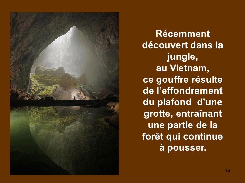 Récemment découvert dans la jungle, au Vietnam, ce gouffre résulte de l'effondrement du plafond d'une grotte, entraînant une partie de la forêt qui continue à pousser.